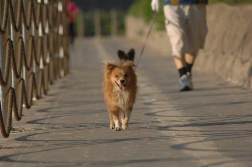 Dog walking youth mission trip fundraising idea